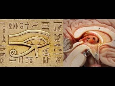 b2ap3_thumbnail_pineal-gland-third-eye-symbol.jpg